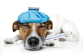 Ziek hondje. band huren? Van onze live muziek knapt zelfs een ziek hondje op. Huur een leuke band bij Ben's bookings
